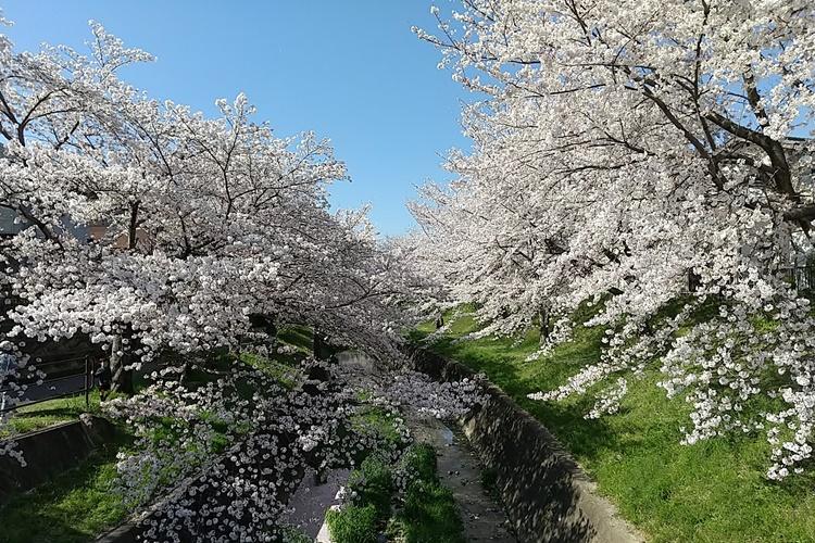 刈谷でリフォームならまる菊工務店桜